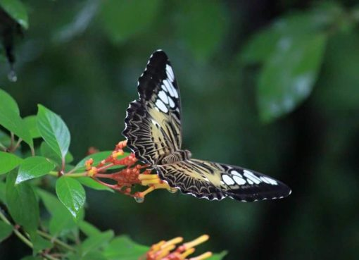 Butterfly Safari Park, Thenmala Attractions, Thenmala Ecotourism