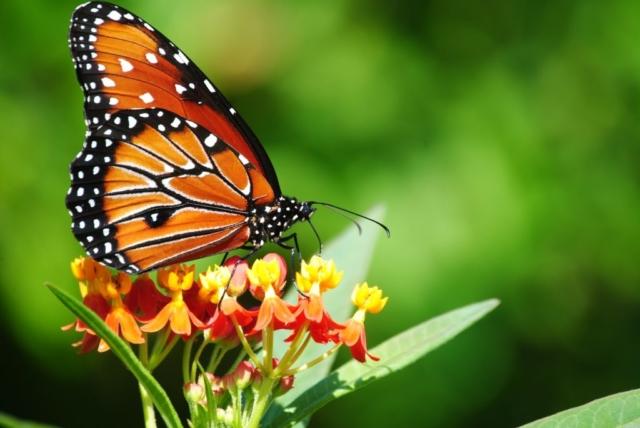 Butterfly Park Thenmala