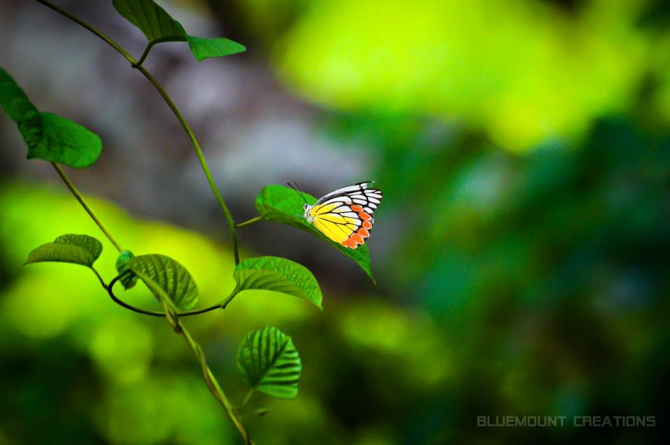 Butterfly Safari Park Thenmala